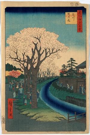Tamagawa-Zutsumi No Hana