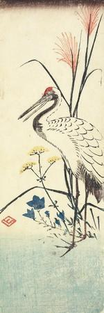 (Pampas Grass, Patrinia, Chinese Bellflower and a Crane), 1830-1858