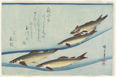 River Trouts in Stream, Early 19th Century