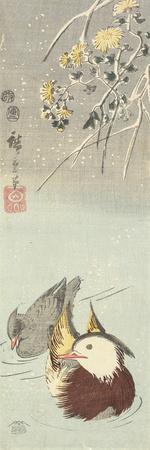 Chrysanthemum and Mandarin Ducks, February 1854