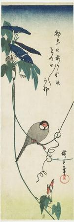 Java Sparrow and Morning Glories, 1834-1839