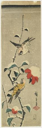 Sparrows and Snowy Camellia, 1837-1848