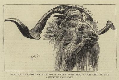 Head of the Goat of the Royal Welsh Fusiliers, Which Died in the Ashantee Campaign