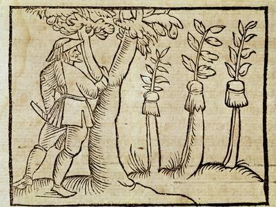 Grafting the Trees from De Agricoltura Vulgare