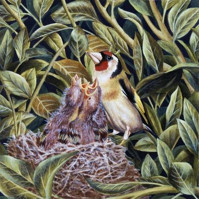 European Goldfinch (Carduelis Carduelis) at Nest Feeding its Chicks, Fringillidae