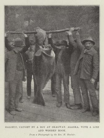 Halibut, Caught by a Boy at Skagway, Alaska, with a Line and Wooden Hook