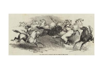 Mr Eaton Stone's Capture of the Wild Horse of the Prairie
