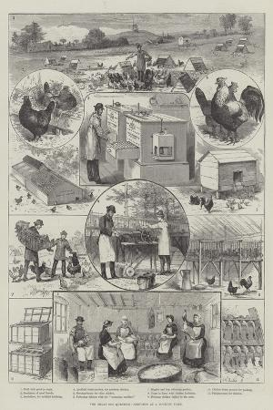 The Great Egg Question, Sketches at a Poultry Farm