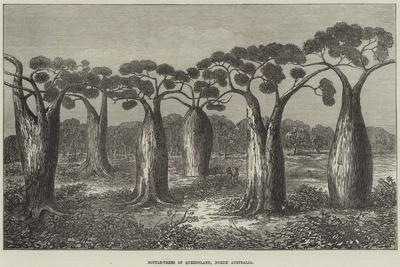 Bottle-Trees of Queensland, North Australia