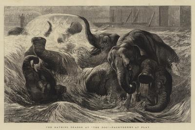 The Bathing Season at The Zoo, Pachyderms at Play
