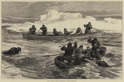 The Pandora Arctic Expedition, Walrus-Shooting
