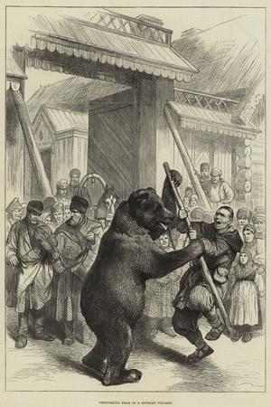 Performing Bear in a Russian Village