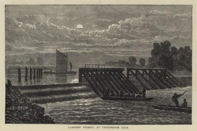 Lampern Fishing at Teddington Lock