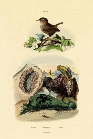 Sea Slug, 1833-39