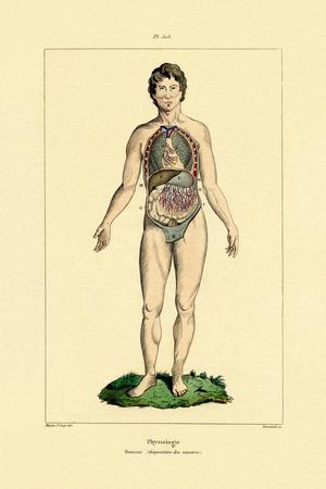 Intestines, 1833-39