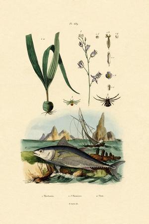 Crab Spider, 1833-39