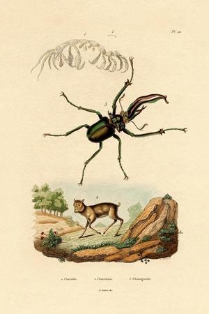 Mouse Deer, 1833-39