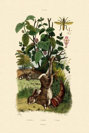 Wild Sage, 1833-39