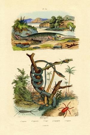 Silverfish, 1833-39