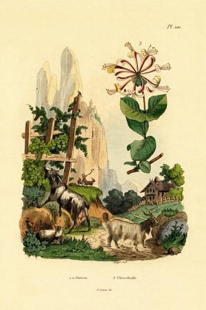 Goats, 1833-39