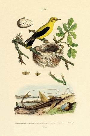 Pine Sawfly, 1833-39