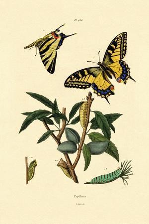 Swallowtail, 1833-39