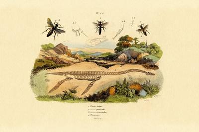 Hornet, 1833-39