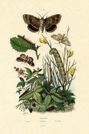 Moths, 1833-39