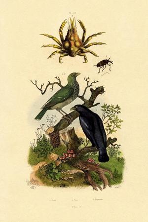 Oriol, 1833-39