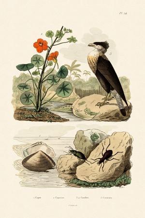 Shell, 1833-39
