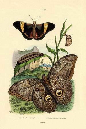 Morpho, 1833-39