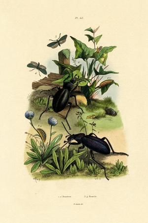 Beetles, 1833-39