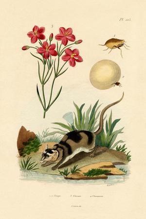 Chigger, 1833-39