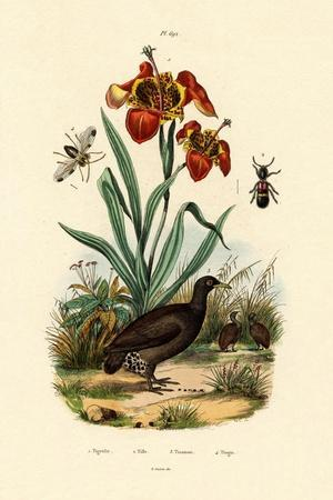 Tiger Flower, 1833-39