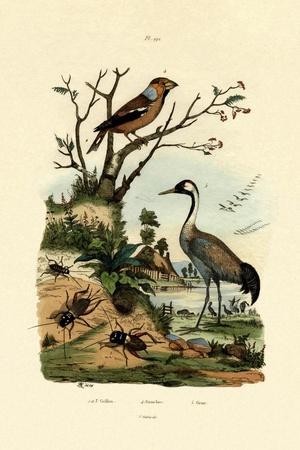 Crickets, 1833-39