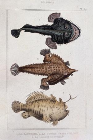 Grotesque Fish