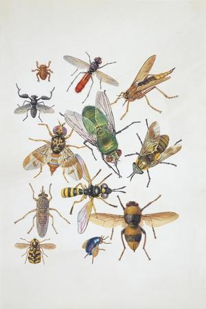 Close-Up of a Group of Diptera Insects