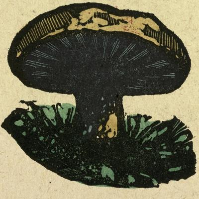 Illustration of English Tales Folk Tales and Ballads. a Mushroom