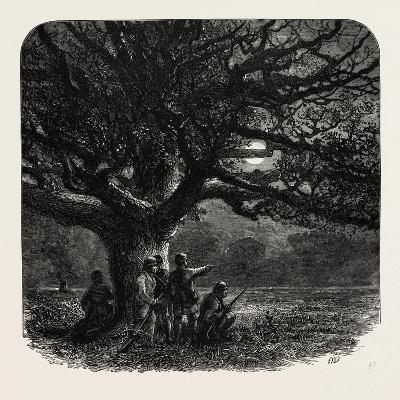 The Watch Oak, Windsor, UK, 19th Century
