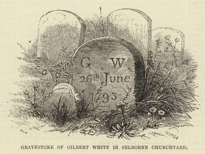 Gravestone of Gilbert White in Selborne Churchyard