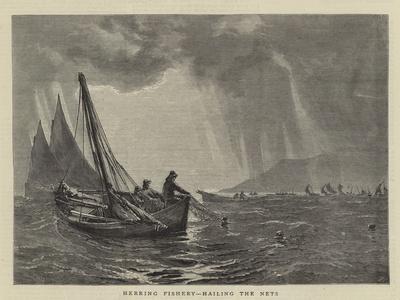 Herring Fishery, Hailing the Nets