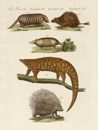 Armoured and Prickly Animals