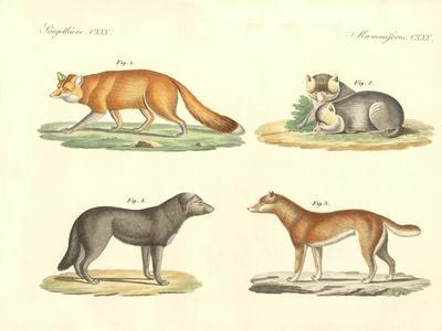 Strange Dogs and Foxes