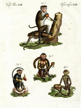 Four Kinds of Monkey