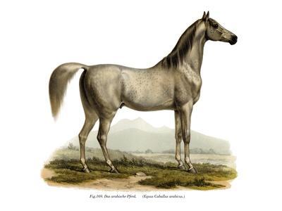 Arabian Horse, 1860