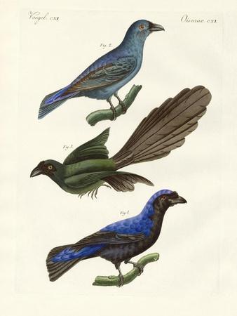 Beautiful Foreign Birds