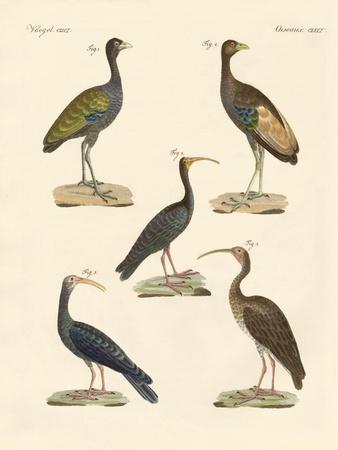 Strange Brasilian Birds