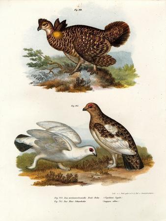 Pinnated Grouse, 1864