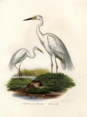 Great White Egret, 1864