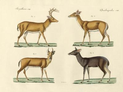 Strange Deers